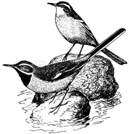 Wagtail clipart #4, Download drawings