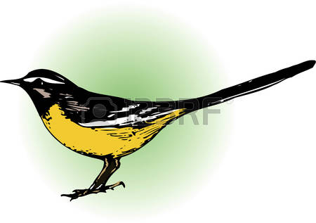 Wagtail clipart #3, Download drawings