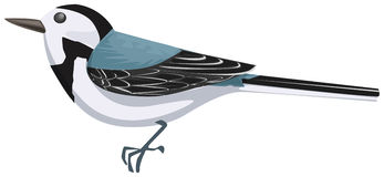 Wagtail clipart #19, Download drawings