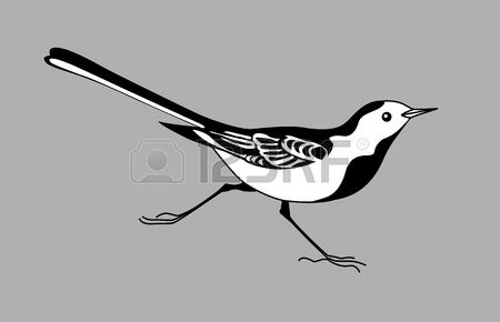 Wagtail clipart #2, Download drawings