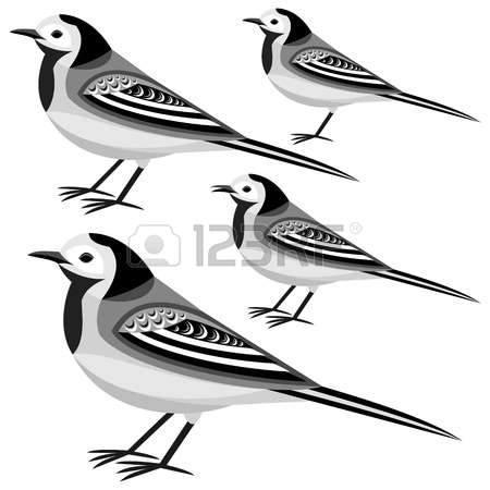 Wagtail clipart #18, Download drawings