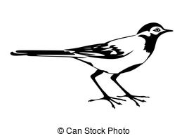 Wagtail clipart #16, Download drawings