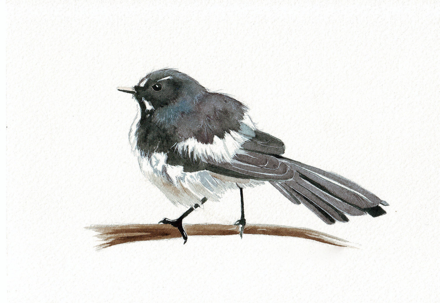 Wagtail clipart #15, Download drawings