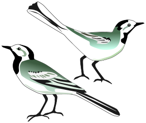 Wagtail svg #20, Download drawings