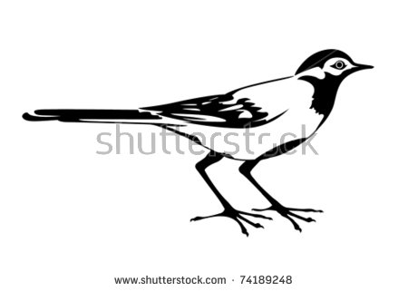 Wagtail svg #19, Download drawings