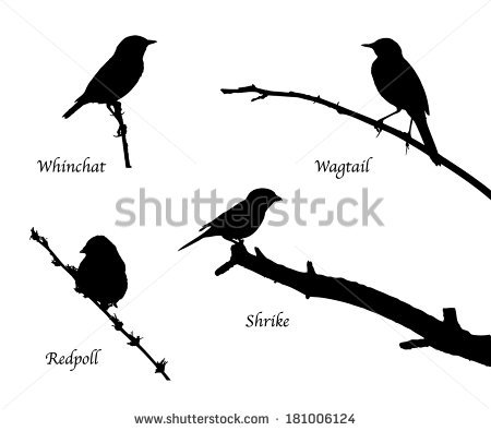 Wagtail svg #18, Download drawings