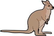 Wallaby clipart #3, Download drawings