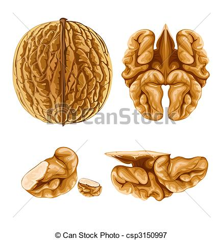 Walnut clipart #18, Download drawings