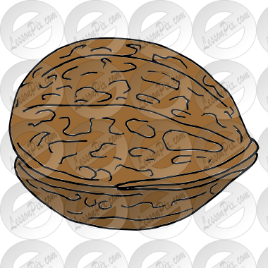 Walnut clipart #9, Download drawings