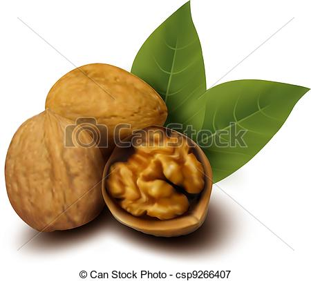 Walnut clipart #5, Download drawings