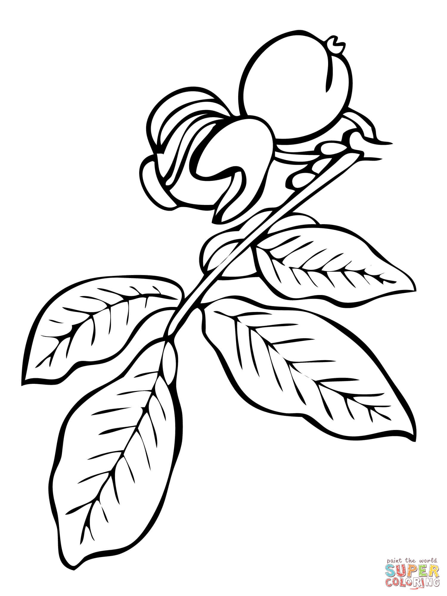 Walnut coloring #10, Download drawings