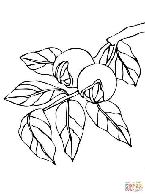 Walnut coloring #7, Download drawings