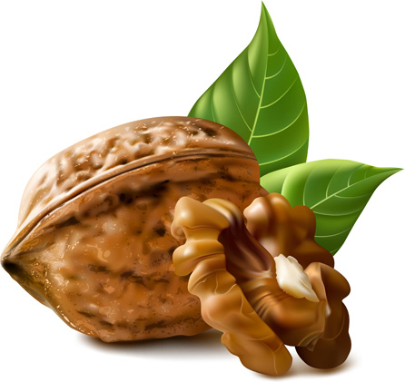 Walnut svg #17, Download drawings