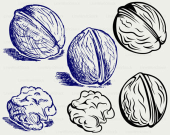 Walnut svg #19, Download drawings