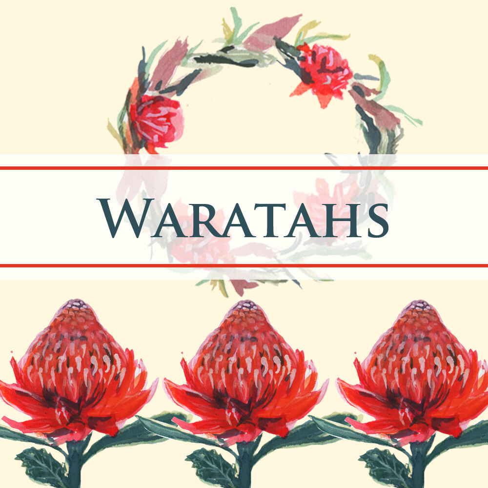 Waratah clipart #4, Download drawings
