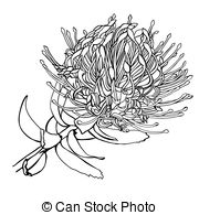 Waratah clipart #6, Download drawings