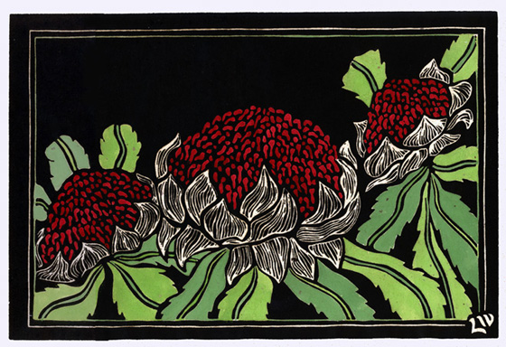 Waratah clipart #16, Download drawings