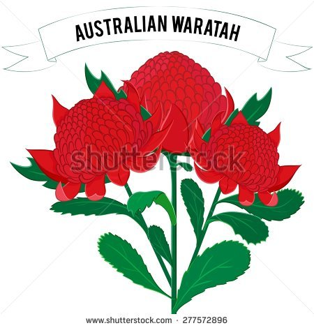 Waratah clipart #17, Download drawings