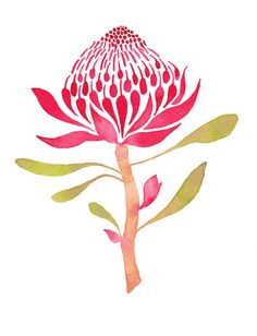 Waratah clipart #12, Download drawings