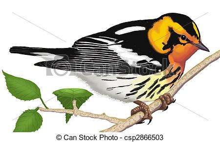 Warbler clipart #11, Download drawings