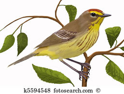 Warbler clipart #10, Download drawings