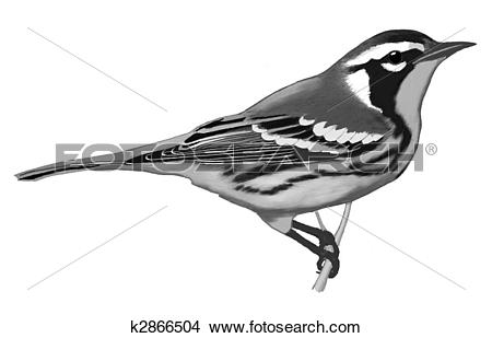 Warbler clipart #6, Download drawings