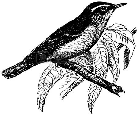Warbler clipart #3, Download drawings