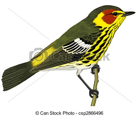 Warbler clipart #16, Download drawings