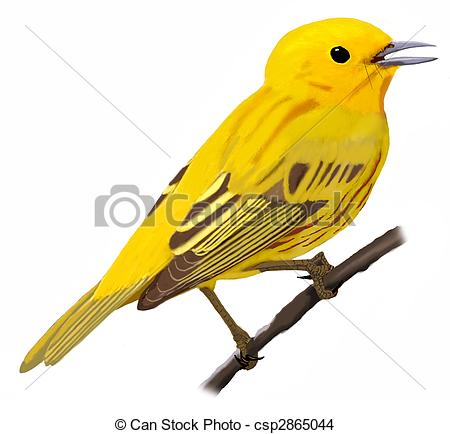 Warbler clipart #14, Download drawings