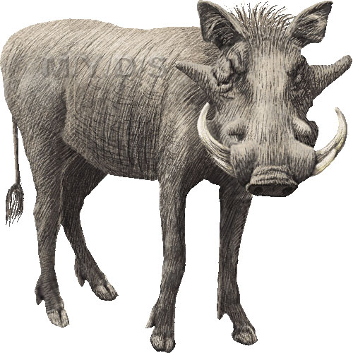 Warthog clipart #7, Download drawings