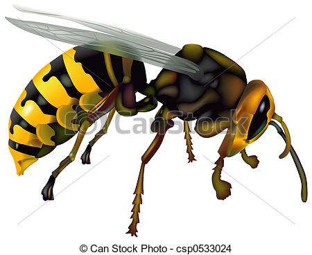 Wasp clipart #11, Download drawings