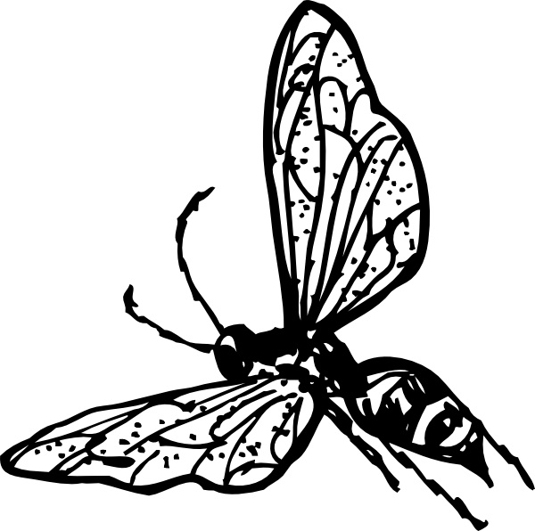 Wasp clipart #6, Download drawings