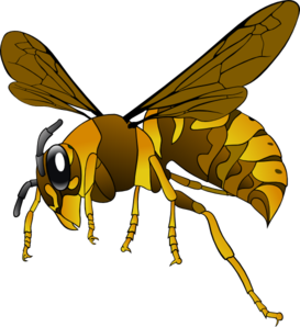 Wasp clipart #3, Download drawings