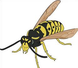 Wasp clipart #17, Download drawings