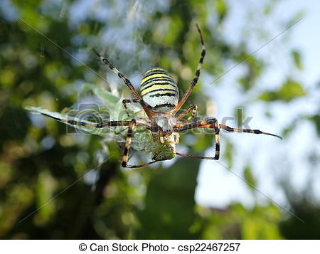 Wasp Spider clipart #20, Download drawings