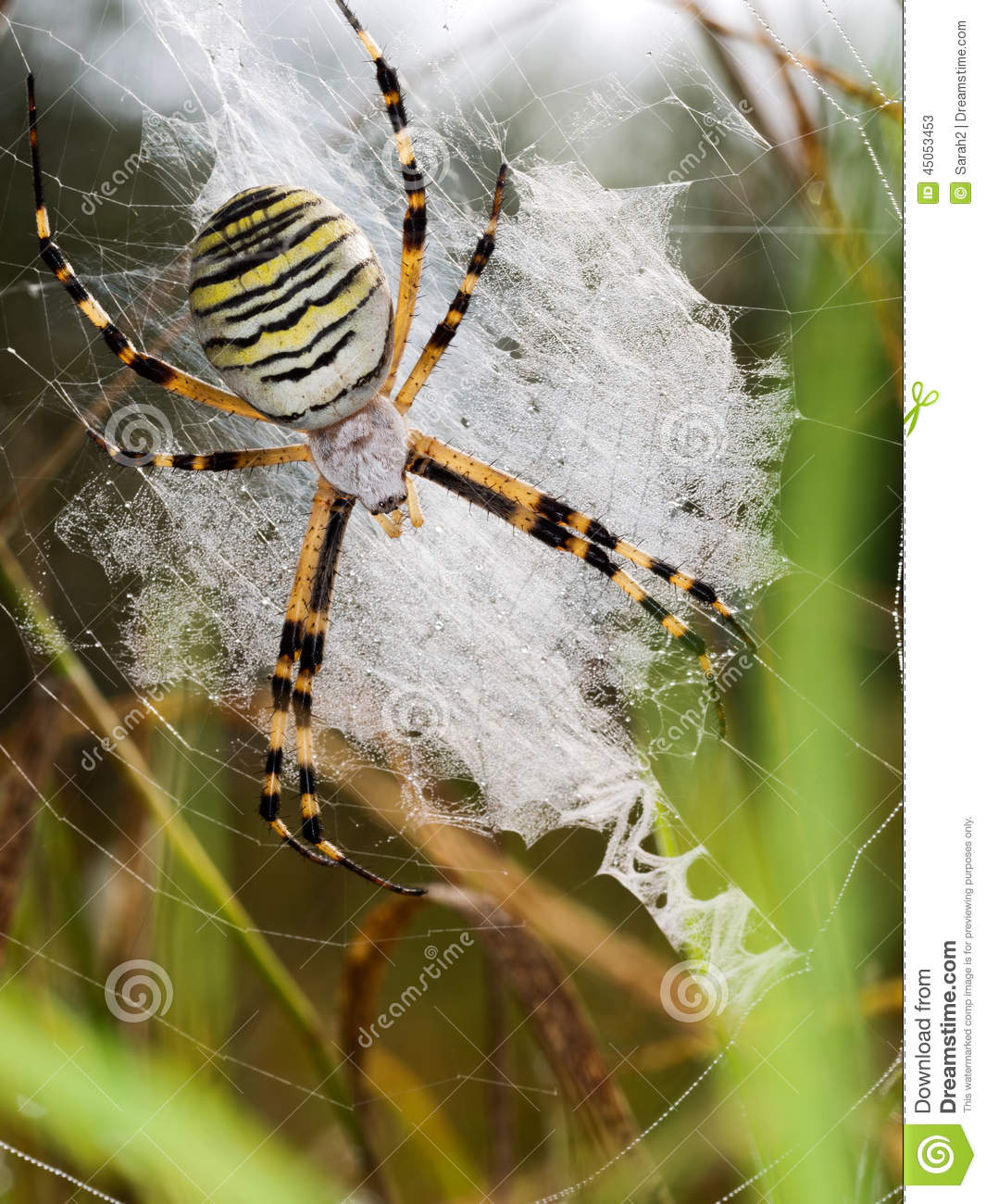Wasp Spider clipart #12, Download drawings