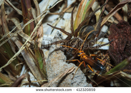 Wasp Spider clipart #1, Download drawings