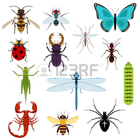 Wasp Spider clipart #7, Download drawings