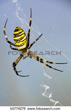 Wasp Spider clipart #19, Download drawings