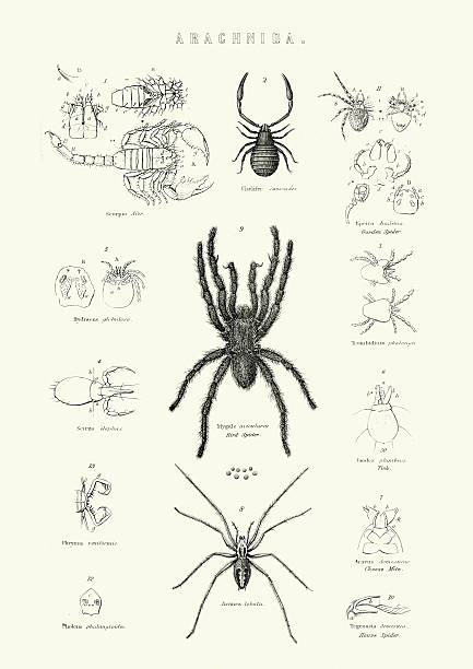 Wasp Spider clipart #16, Download drawings