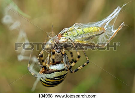 Wasp Spider clipart #14, Download drawings