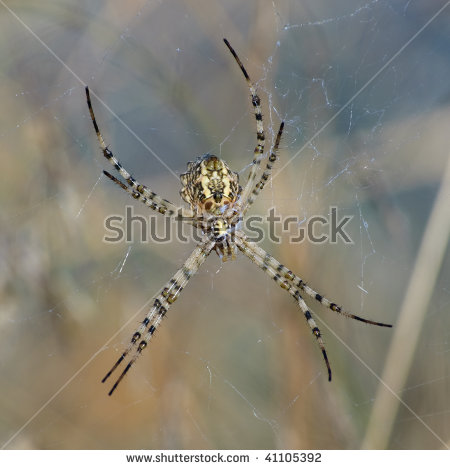 Wasp Spider clipart #10, Download drawings