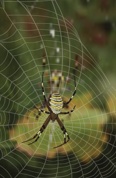 Wasp Spider clipart #17, Download drawings