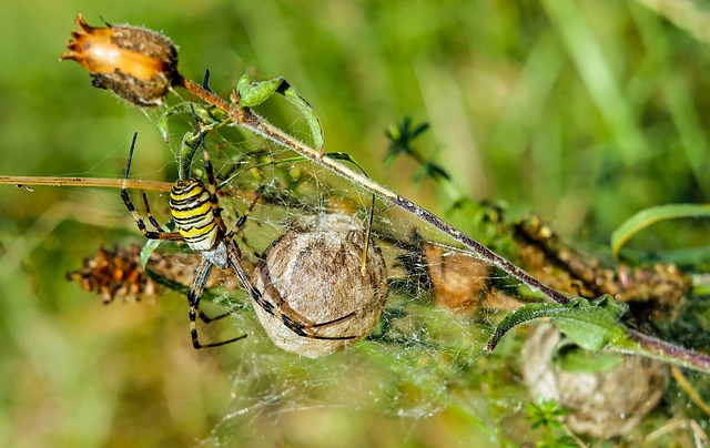 Wasp Spider svg #8, Download drawings