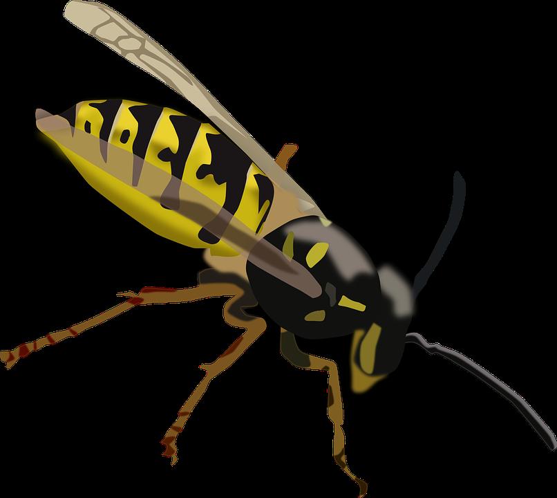 Wasp svg #12, Download drawings