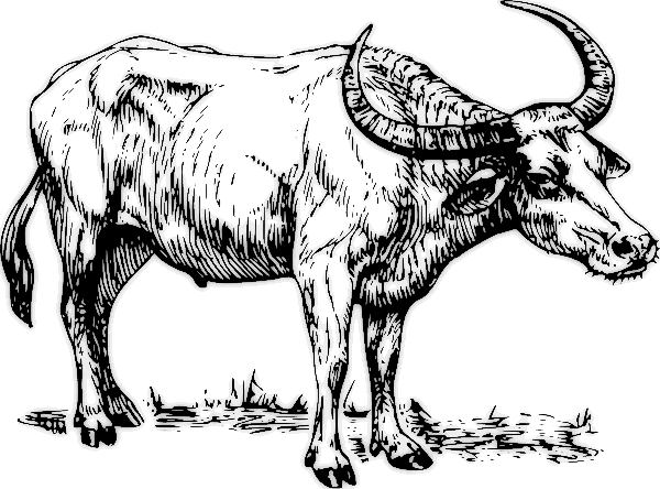 Water Buffalo clipart #18, Download drawings