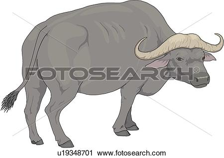 Water Buffalo clipart #14, Download drawings