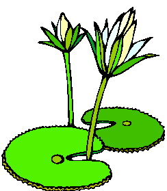 Water Lily clipart #13, Download drawings