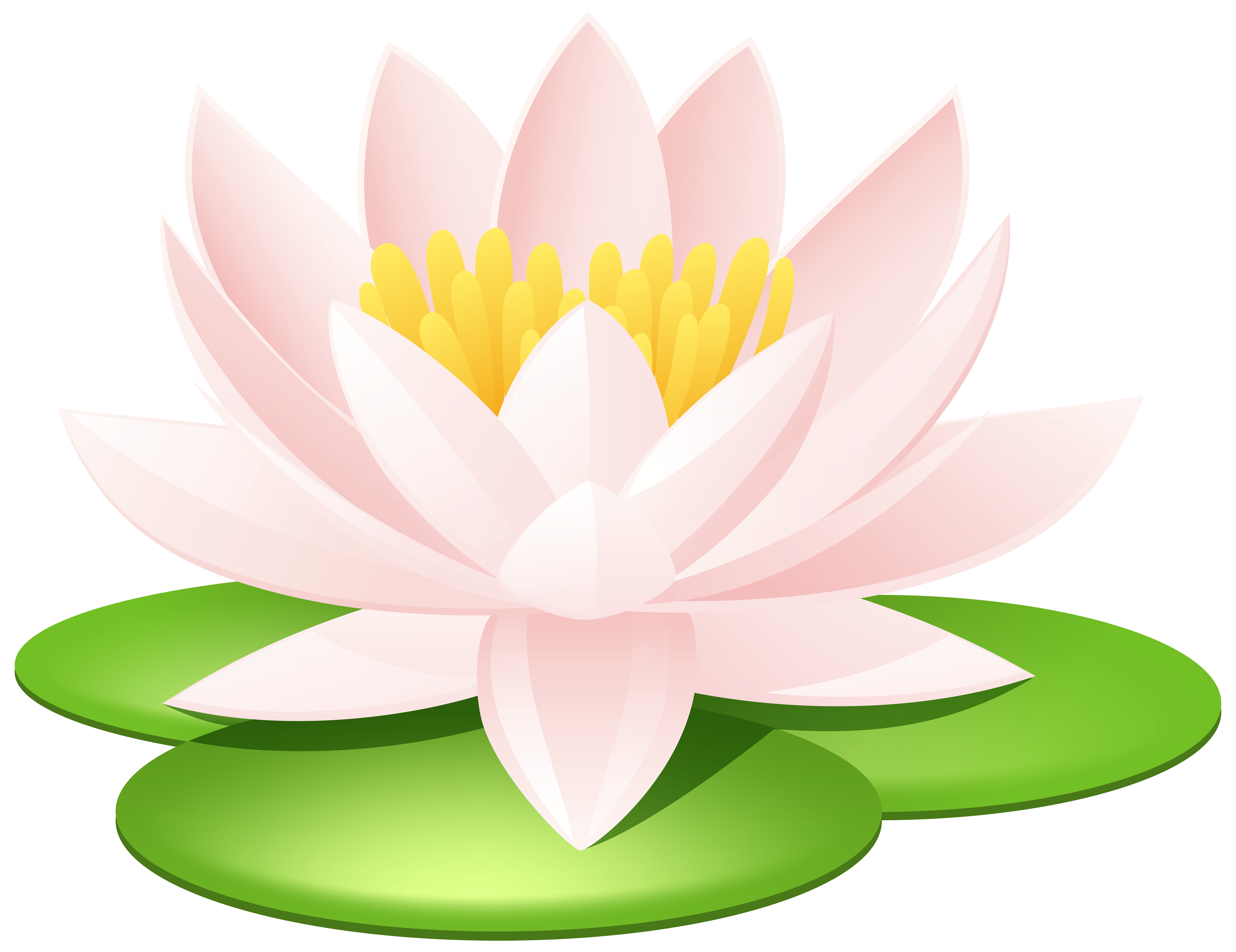 Water Lily clipart #2, Download drawings