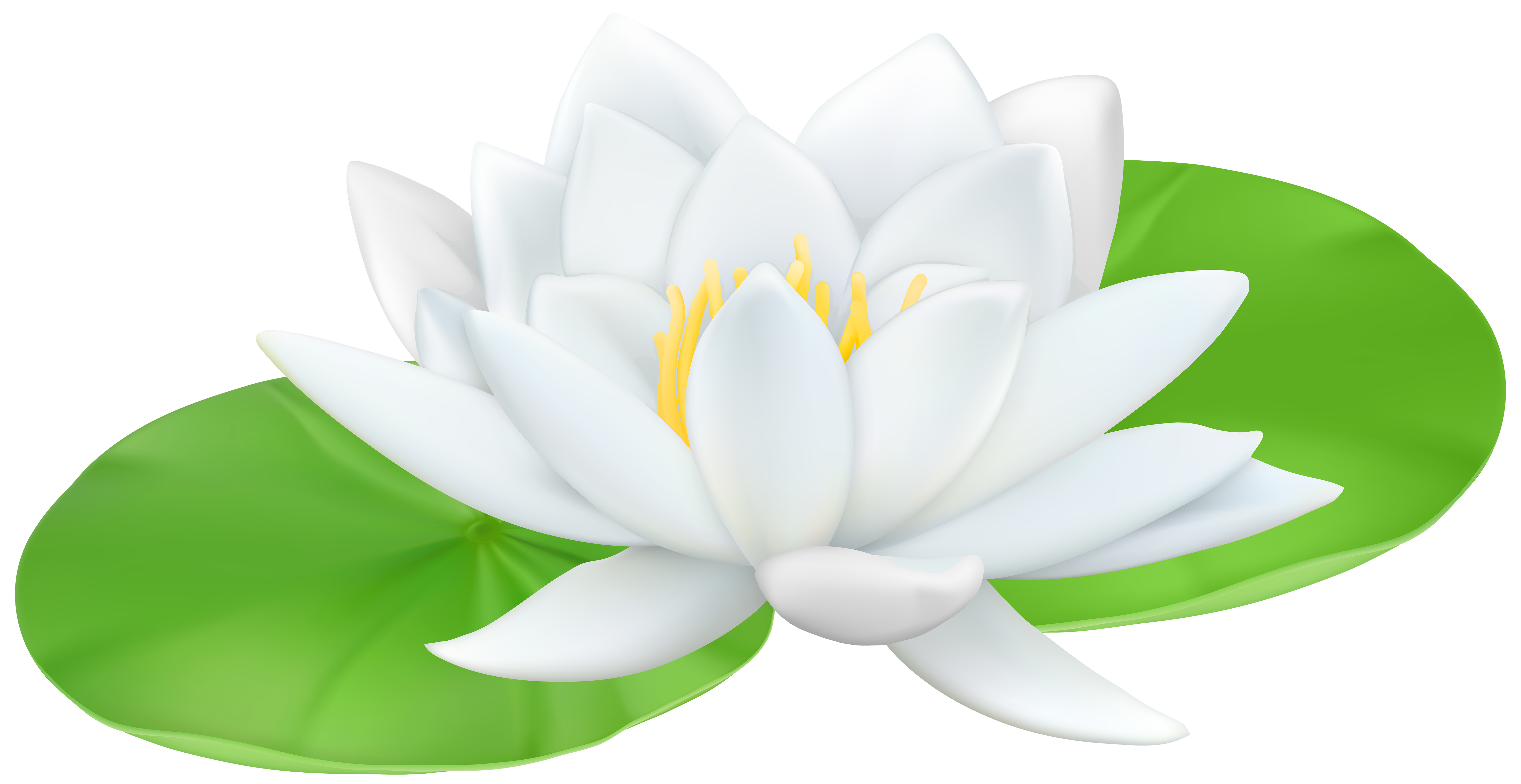 Water Lily clipart #3, Download drawings
